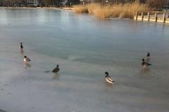 Balaton télen 3
